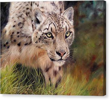 Snow Leopards Canvas Print - Snow Leopard by David Stribbling