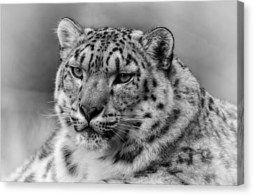Canvas Print featuring the photograph Snow Leopard Portrait by Chris Boulton
