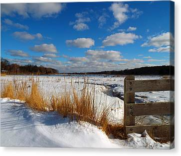 Snow Marsh Canvas Print by Dianne Cowen