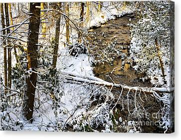 Snow Monongahela National Forest Canvas Print by Thomas R Fletcher