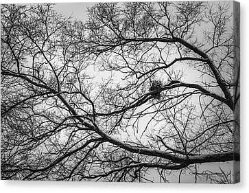 Snow On Bare Branches Canvas Print by Karen Casey-Smith