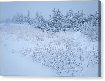 Canvas Print featuring the photograph Snow On New Years Eve by Tim Newton