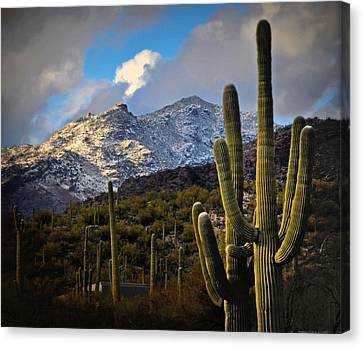 Snow On The Catalina Mountains Canvas Print