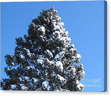 Snow On The Pine Canvas Print by Donna Cavender