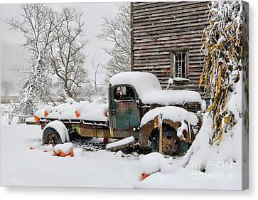 Snow On The Pumpkin Harvest Canvas Print by Benanne Stiens