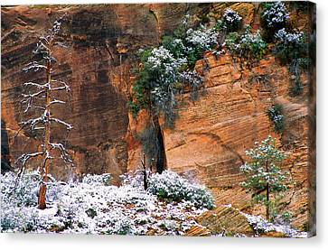 Snow On Trees Canvas Print by Panoramic Images