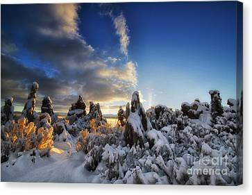 Snow On Tufa At Mono Lake Canvas Print by Peter Dang