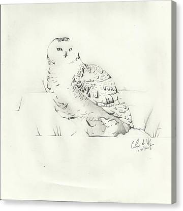 Snow Owl In Field Canvas Print by Christopher Hughes