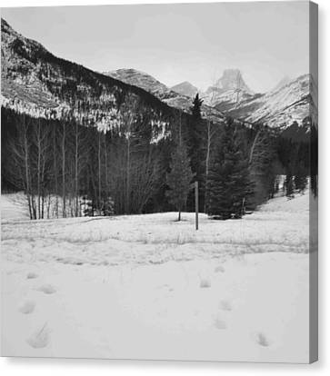 Snow Prints Canvas Print by Cheryl Miller