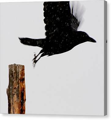 Canvas Print featuring the photograph Snow Raven Blurr by Britt Runyon