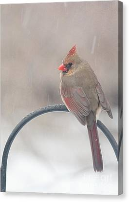 Snow Shower Canvas Print