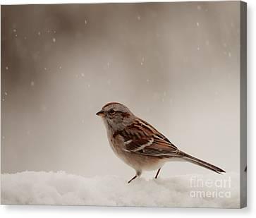 Snow Sparrow Canvas Print