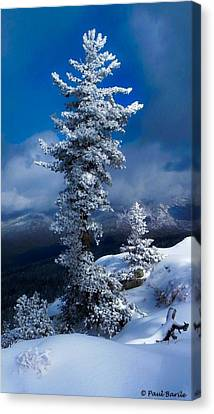 Snow Storm Tree Canvas Print by Mountain Panda Photography