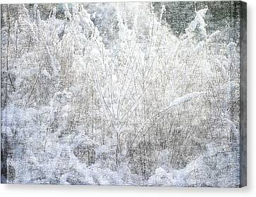 Snow Textures Canvas Print by Suzanne Powers