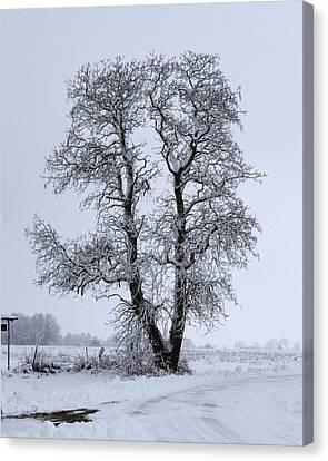 Snow Tree Canvas Print by Eric Mace