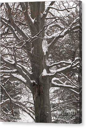 Snow Tree Canvas Print by Melissa Stoudt