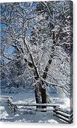 Snow Tree - Yosemite National Park Canvas Print by Jim Pavelle