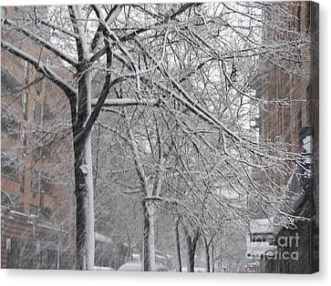 Snow Trees Canvas Print by James Dolan