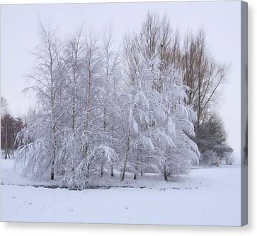 Canvas Print featuring the photograph Snow Trees by Paul Gulliver