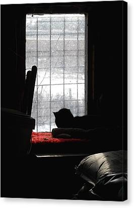 Snow Watching Canvas Print