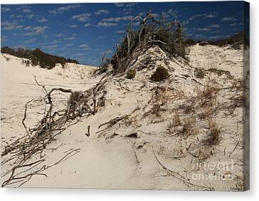 Snow White Dunes Canvas Print by Adam Jewell