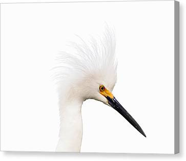 Canvas Print featuring the photograph Snow White Egret by Phil Stone