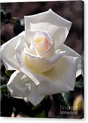 Snow White Rose Canvas Print
