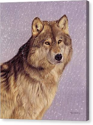 Snow Wolf Canvas Print by David Stribbling