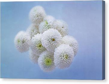 Selecting Canvas Print - Snowballs-pom Mum by Kim Hojnacki