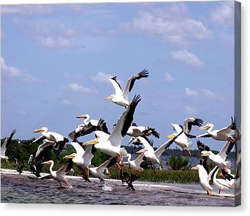 Snowbirds Heading South Canvas Print
