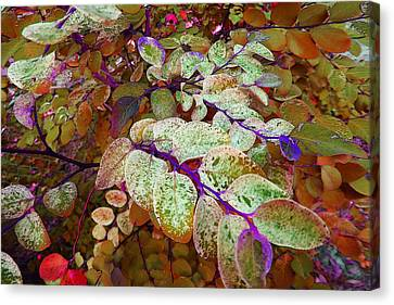 Canvas Print featuring the photograph Snowbush by Ginny Schmidt