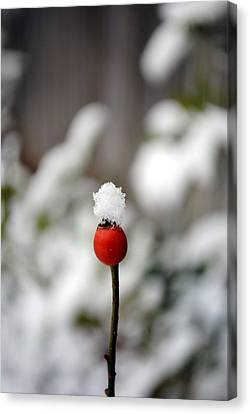 Canvas Print featuring the photograph Snowcap by Kelly Nowak