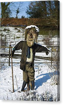 Snowcapped Scarecrow Canvas Print by Anne Gilbert
