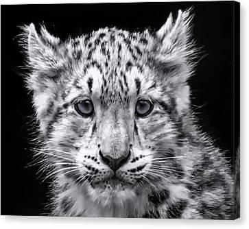 Canvas Print featuring the photograph Snowcub by Chris Boulton