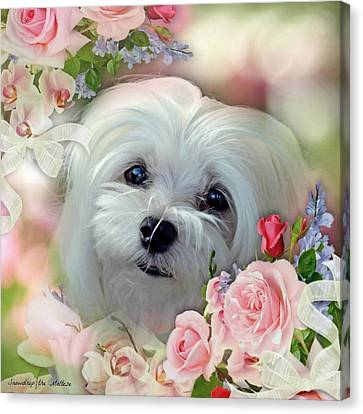 Snowdrop The Maltese Canvas Print by Morag Bates