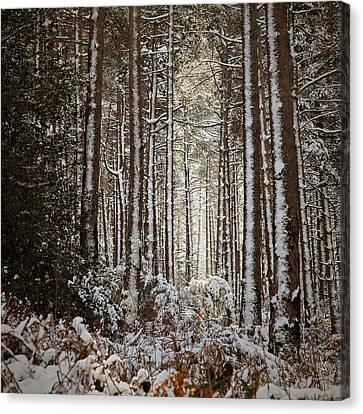 Canvas Print featuring the photograph Snowed Forest by Antonio Jorge Nunes