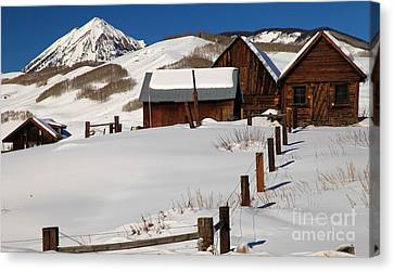 Snowed In Canvas Print by Adam Jewell