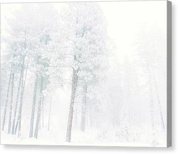 Snowed In Canvas Print by Tara Turner