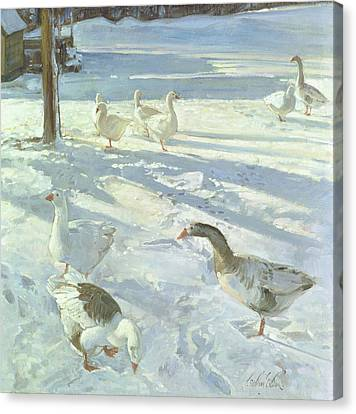 Snowfeeders, 1999 Oil On Canvas Canvas Print by Timothy Easton