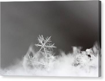 Snowflake 1 Canvas Print by Becky Lodes