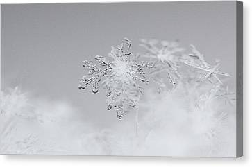 Snowflake 5 Canvas Print by Becky Lodes