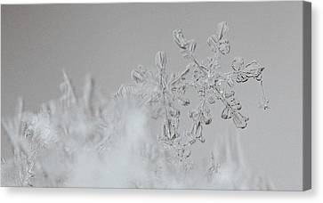 Snowflake 6 Canvas Print by Becky Lodes