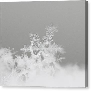 Snowflake 8 Canvas Print by Becky Lodes