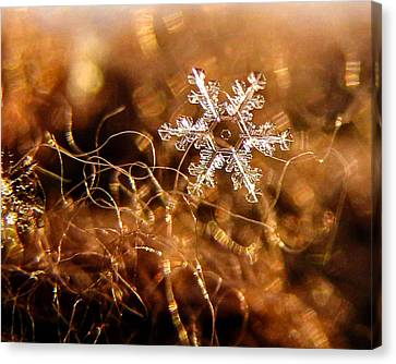 Snowflake On Brown Canvas Print