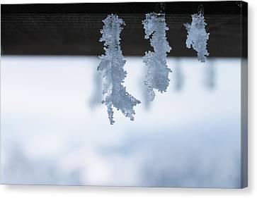 Snowflakes Close-up Canvas Print by Vlad Baciu