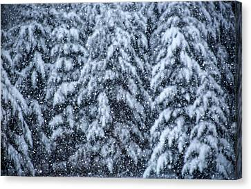 Canvas Print featuring the photograph Snowflakes by Dennis Bucklin