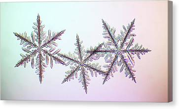 Snowflakes Canvas Print by Kenneth Libbrecht
