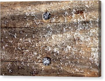 Snowflakes On Wood Canvas Print by Barbara Giordano