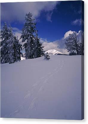 Snowshoe Tracks On Snow, Mt. Scott Canvas Print