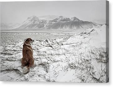 Snowstorm Canvas Print by Bragi Ingibergsson -
